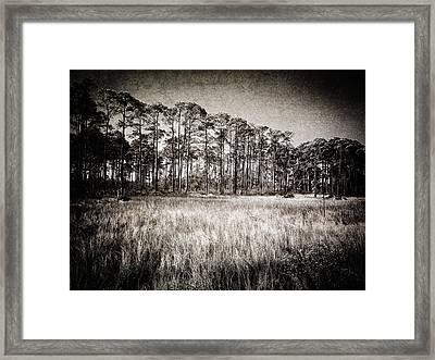 Florida Pine 2 Framed Print by Skip Nall