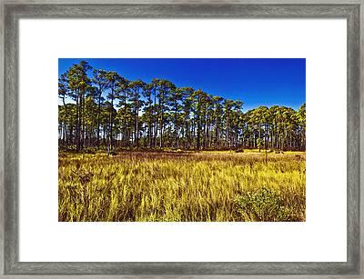 Florida Pine 3 Framed Print by Skip Nall