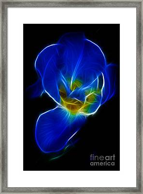 Flower - Coral Blue - Abstract Framed Print by Paul Ward