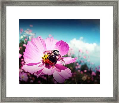 Flower And Company Framed Print by Sanjay Avasarala