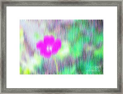 Flower In The Rain Framed Print by Silvia Ganora