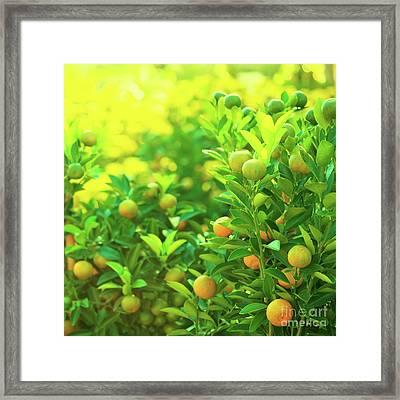 Flower Market Framed Print by MotHaiBaPhoto Prints