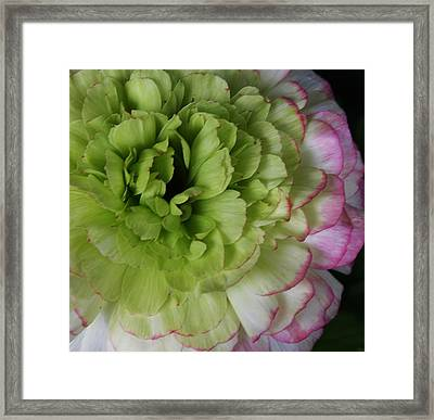 Flower Of A Different Color Framed Print by Bruce Bley