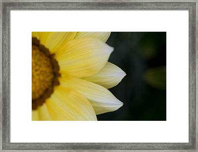 Flower Petals Framed Print by Keith Levit