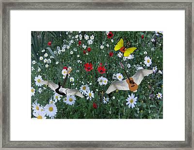 Flower Power  Framed Print by Eric Kempson