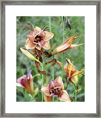 Flower Sprite Framed Print by Bill Fleming