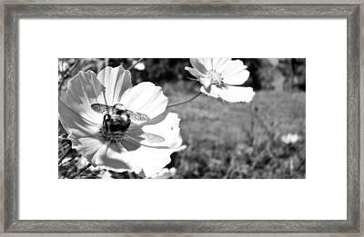 Flower With Company Framed Print by Sanjay Avasarala