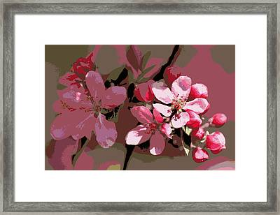Flowering Crabapple Posterized Framed Print by Mark J Seefeldt