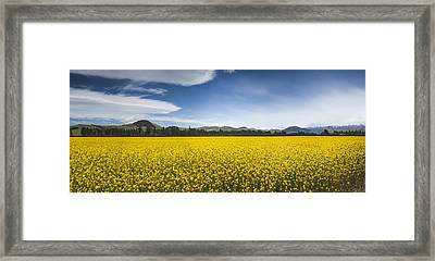 Flowering Mustard Crop In Canterbury Framed Print by Colin Monteath
