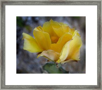 Flowering Prickly Pear Cactus In Florida Framed Print by Grace Dillon