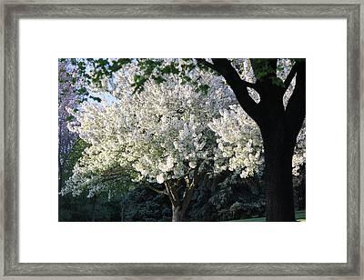 Flowering Springtime Tree Framed Print by James Hammen