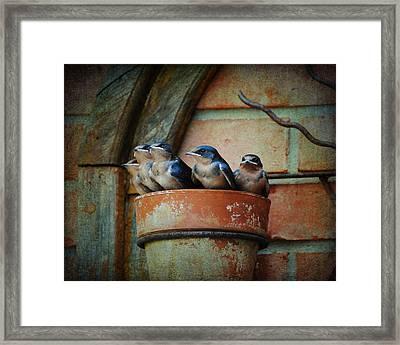 Flowerpot Swallows Framed Print by Jai Johnson