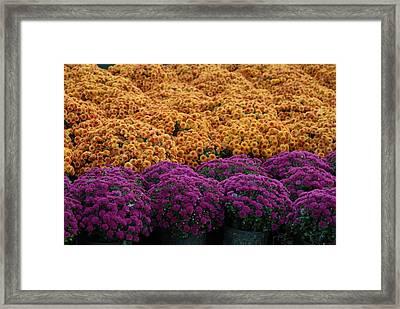 Flowers 280 Framed Print by Joyce StJames