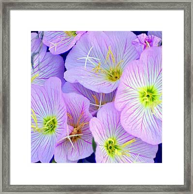 Flowers Flowers Framed Print by Marty Koch