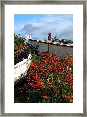 Flowers In Wooden Boat In Roundstone Framed Print by Peter Zoeller