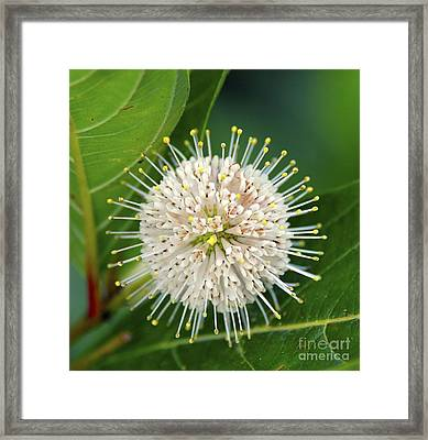 Flowers Of The Forest Series Framed Print by Terry Troupe