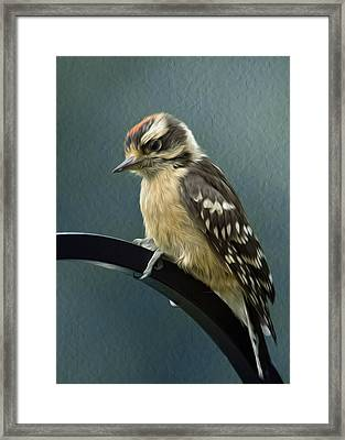 Flowing Downy Woodpecker Framed Print by Bill Tiepelman