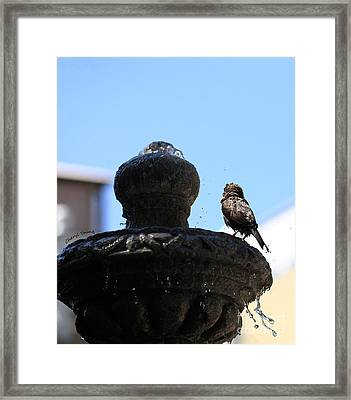 Fluff Dry Framed Print by Cheryl Young