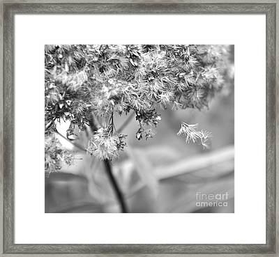 Fluffy  2 Framed Print by Tanya  Searcy
