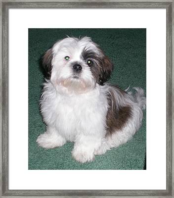 Fluffy Dog Framed Print by Sherry Hunter