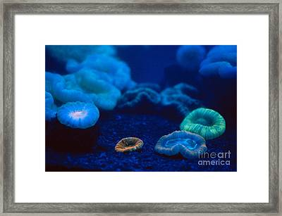 Fluorescent Corals Framed Print by Kjell B Sandved and Photo Researchers
