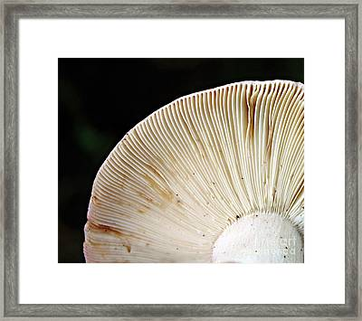 Fluted Architecture Framed Print by Kami McKeon