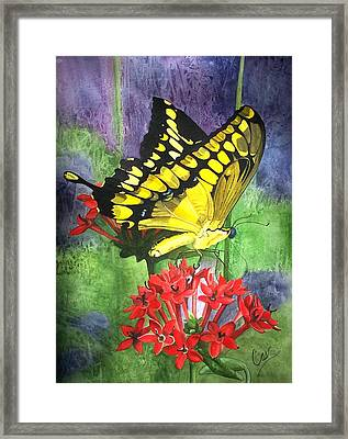 Flutter-by Framed Print by Karen Casciani