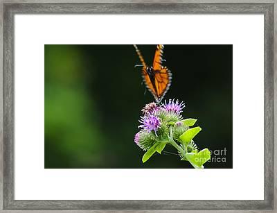 Fluttering Away... Framed Print by Christine Kapler