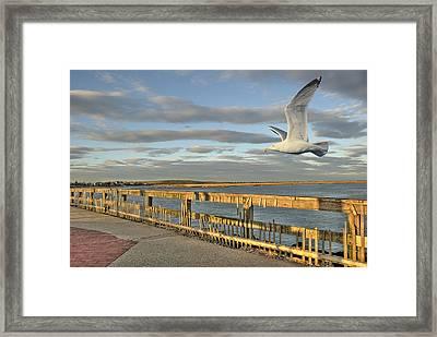 Fly Bye Framed Print by David Clark