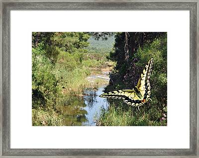 Fly Past Framed Print by Eric Kempson