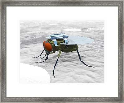Fly With Microchip Framed Print by Christian Darkin
