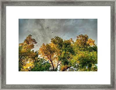 Flying Leaves Framed Print by Stephen  Johnson