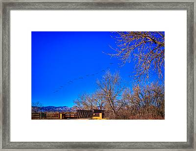 Flying Over South Platte Park Framed Print by David Patterson