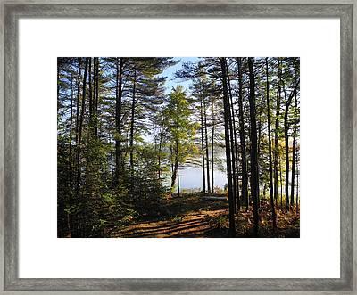 Foggy Morn Framed Print by Lynda Lehmann