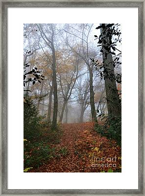 Fogy Forest In The Morning 3 Framed Print by Bruno Santoro