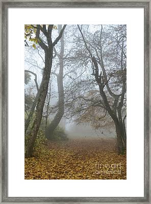 Fogy Forest In The Morning Framed Print by Bruno Santoro