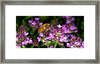 Follow The Bee Framed Print by Terry Elniski