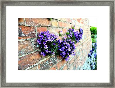 Follow The Flower Brick Wall Framed Print by Rene Triay Photography
