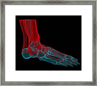 Foot Anatomy, Artwork Framed Print by Andrzej Wojcicki