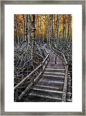 Footpath In Mangrove Forest Framed Print by Adrian Evans