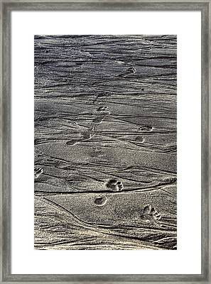 Footprints Framed Print by Joana Kruse