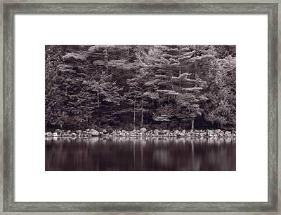 Forest At Jordan Pond Acadia Bw Framed Print by Steve Gadomski