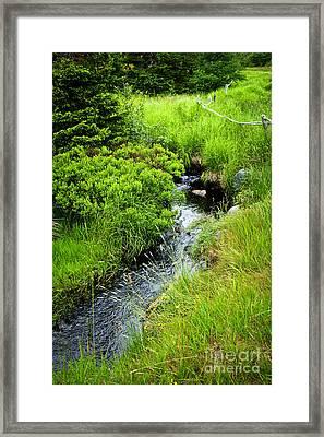 Forest Creek In Newfoundland Framed Print by Elena Elisseeva