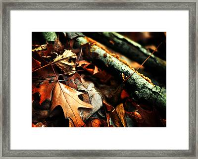 Forest Fade Away Framed Print by Rebecca Sherman