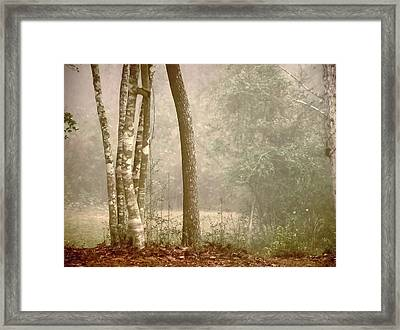 Forest In Fog Framed Print by Robert Brown