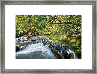 Forest Jewel Framed Print by Debra and Dave Vanderlaan