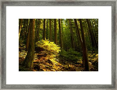 Forest Framed Print by Matt  Trimble