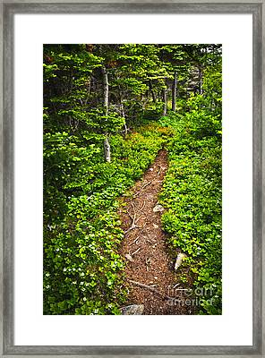 Forest Path In Newfoundland Framed Print by Elena Elisseeva