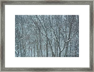 Forest Snowstorm Framed Print by HD Connelly