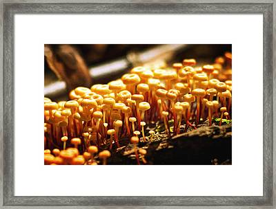 Forest Trifles Framed Print by Rebecca Sherman